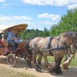 Les Jeux Equestres Cheval et Différences 2018